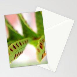 Macro 007 Stationery Cards