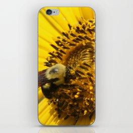Bumblebee on Sunflower iPhone Skin