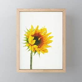 Yellow Provincetown Sunflower Framed Mini Art Print