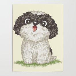 Shih Tzu happy Poster