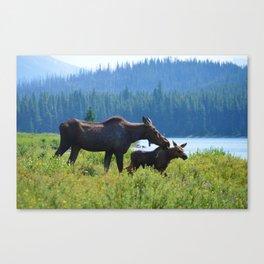 Mother moose & calf at Maligne Lake in Jasper National Park Canvas Print