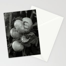 The Ripe Tomatoes Stationery Cards
