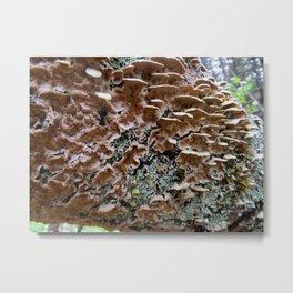 Fungi on a Fallen Tree Metal Print