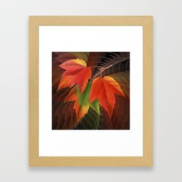Maple Leaves Spiral Framed Art Print