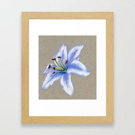 Lavender Lily Framed Art Print