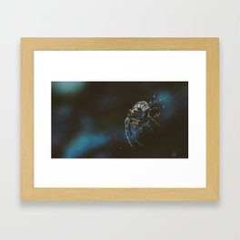 Spider Creeper Framed Art Print