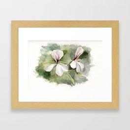 Botanical painting Framed Art Print
