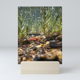 Bottom of Casco Bay (2) Mini Art Print