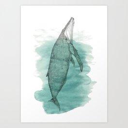Hunchback whale Art Print