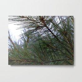 pine dew Metal Print