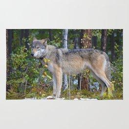Wolf encounter in Jasper National Park Rug