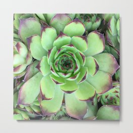 Green and Red Succulent Photo Metal Print