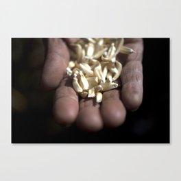 Hand of corn Canvas Print
