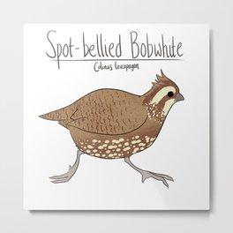 Spot-bellied Bobwhite Metal Print