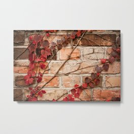 Red ivy leaves creeper on bricks wall Metal Print
