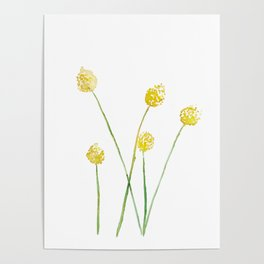 Yellow Billy Button Flowers Poster