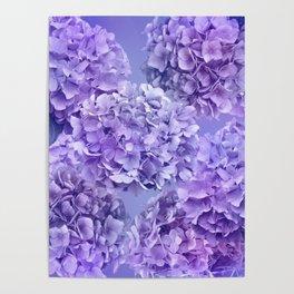 Painterly purple blue hydrangea flowers Poster