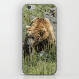 Brown Bear After His Dip iPhone Skin