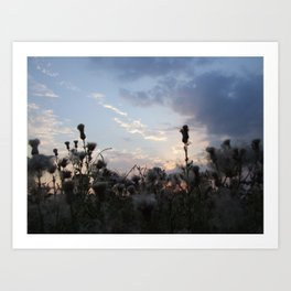 Dusk with Thistles Art Print