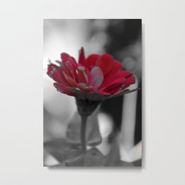 Red Zinnia Metal Print