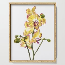 Yellow Phalaenopsis Orchid Traditional Artwork Serving Tray