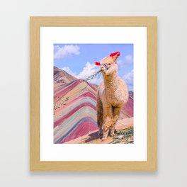 lama in colorful mountaiun Framed Art Print