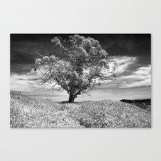 The Noble Gum Tree Canvas Print