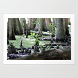 Down in the bayou Art Print