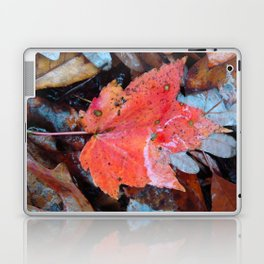 autumnal reverie 646 Laptop & iPad Skin