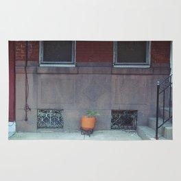 an orange pot outside Rug
