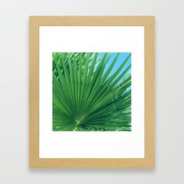Fan Palm Leaf Against Azur Blue Sky Framed Art Print