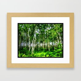 Birch Forest Framed Art Print