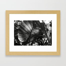 In the light Framed Art Print