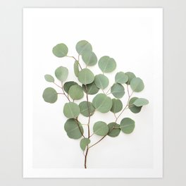 Eucalyptus Branch Art Print