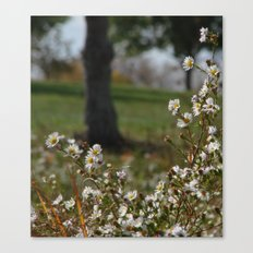 Midday Meadow Canvas Print