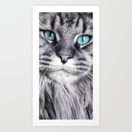 chat lolita yeux bleus - cat - main coon Art Print