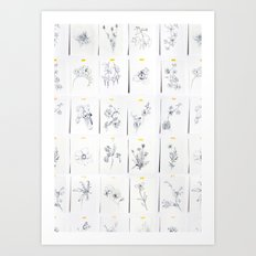 Botanical Collection Art Print