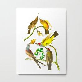 Arkansaw Flycatcher, Swallow-Tailed Flycatcher, Says Flycatcher John James Audubon Birds Metal Print