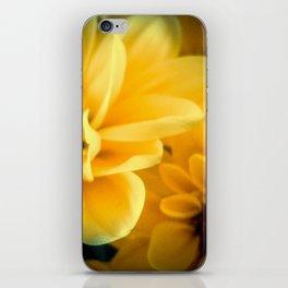 Spring Mums iPhone Skin