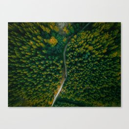Wall Art Decor, Aerial Photo Print of Pine Forest in Czech Republic | by Mate Valtr Canvas Print