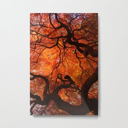 Eloquence - Autumn Maple Leaves Metal Print