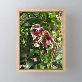 Withered lily Framed Mini Art Print