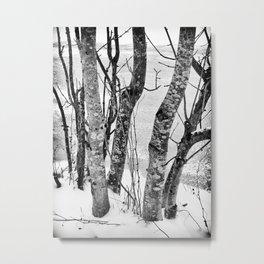 Black and White Trees Metal Print