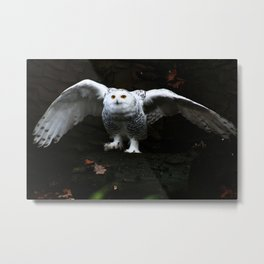 Snowy Owl With Open Wings Metal Print