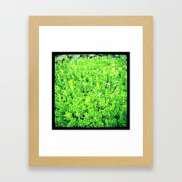 Green Bush Framed Art Print