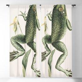 Bull Frog (Rana maxima) from The natural history of Carolina Florida and the Bahama Islands (1754) b Blackout Curtain