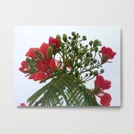 A Blossom from Haiti Metal Print