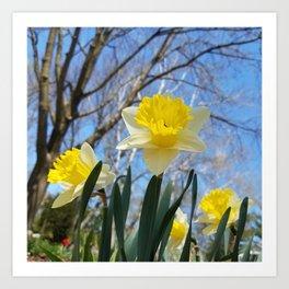 Daffodils in the sky Art Print