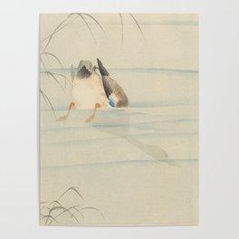 Wild duck, the head under water - Ohara Koson (1900-1930) Poster