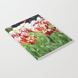 Striped tulips Notebook